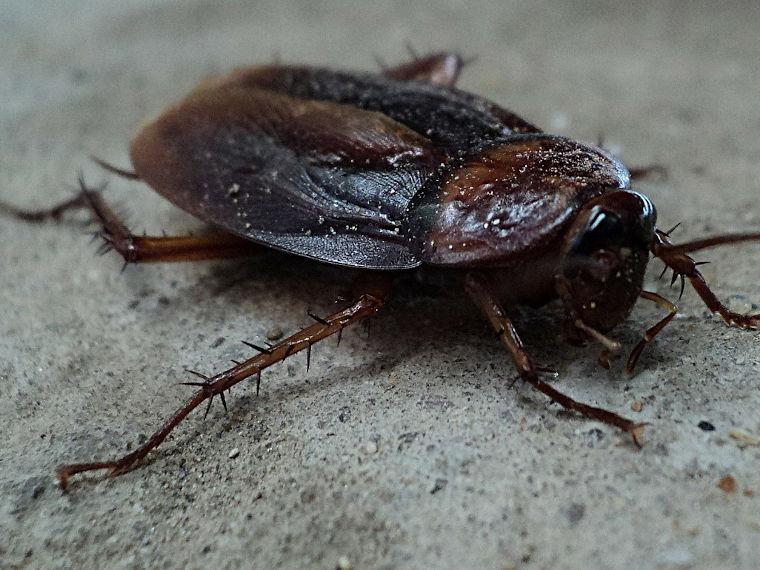 Insektenbekämpfung durch die Schädlingsbekämpfung Schemeth GmbH in Erding